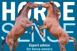 Horse sense for web